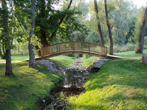 Wooden bridge over stream amongst trees in Brussels